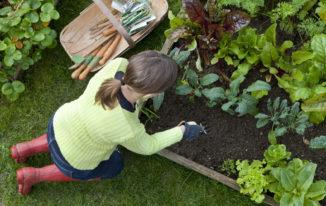 Gardening_hobby_stress_depression