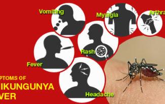 Symptoms of Chikungunya