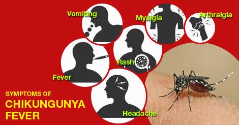 mosquito rash #11