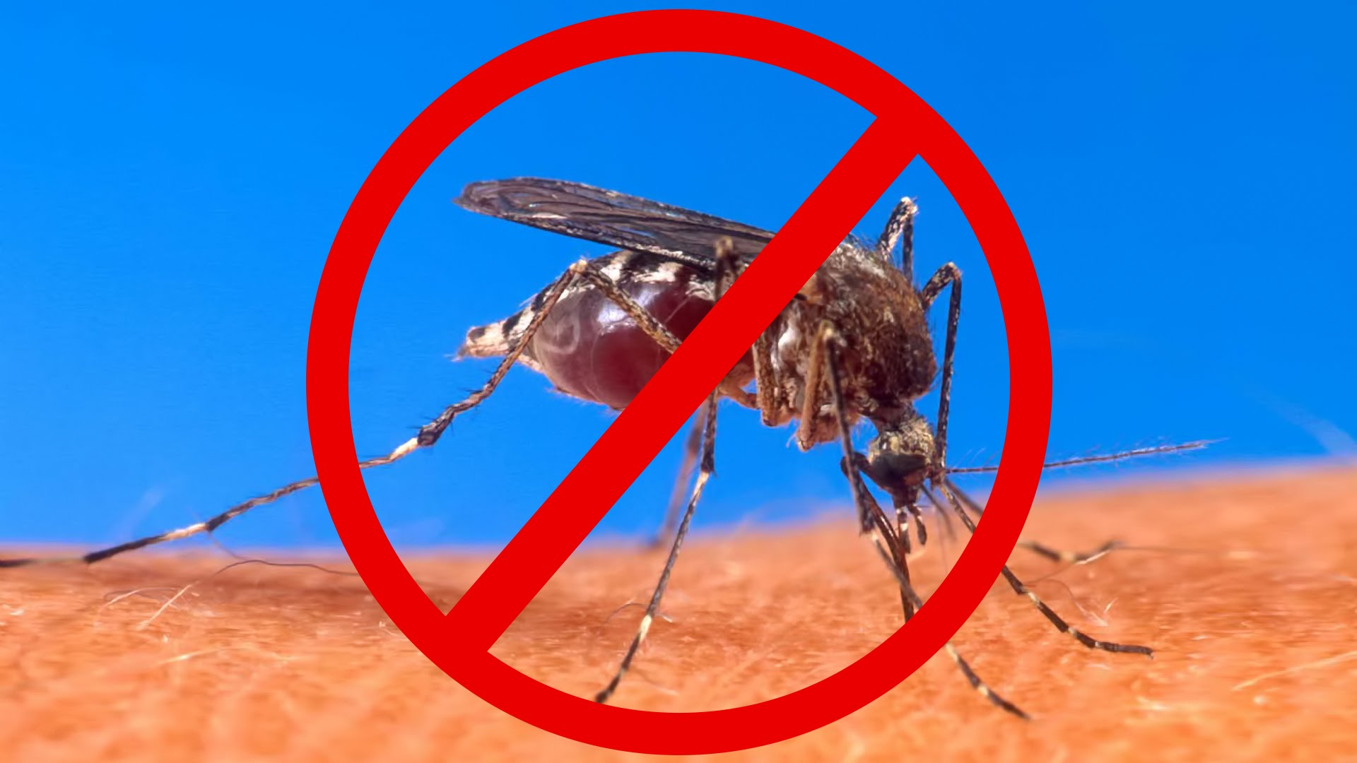 How Does Mosquito Repellent Works Health Fundaa