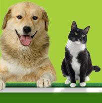 Pet Keeping_hobby_stress_depression
