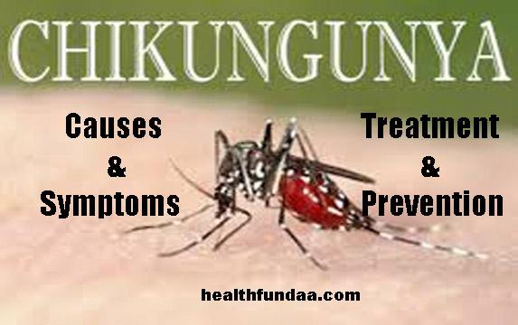 Chikungunya: Causes Symptoms Treatment & Prevention
