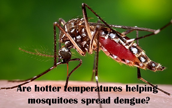 Are hotter temperatures helping mosquitoes spread dengue?